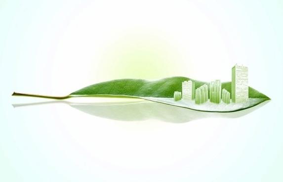 Новинарска сторија: Значењето на заштитените диви видови растенија и габи за биолошката разновидност, луѓето, општеството и економијата